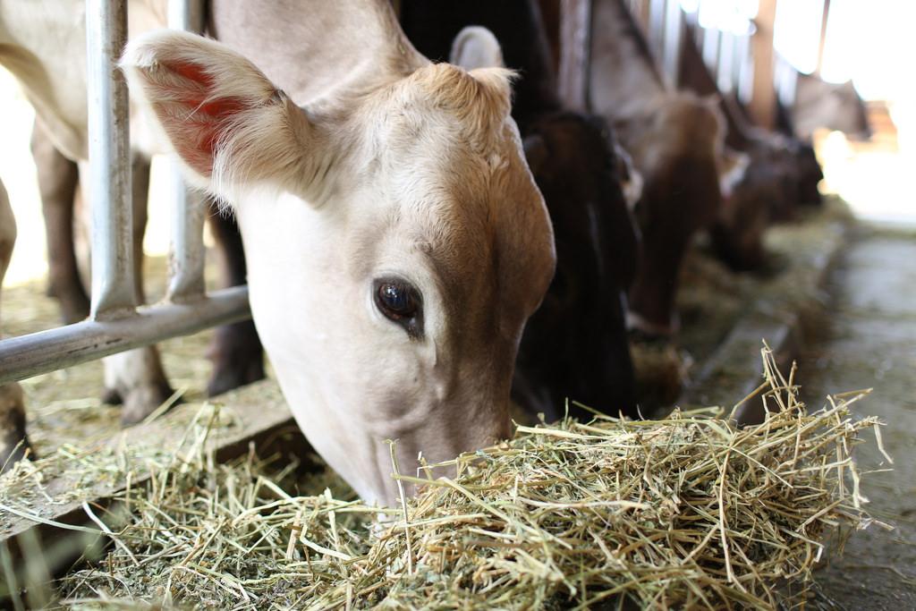 farm grown alfalfa