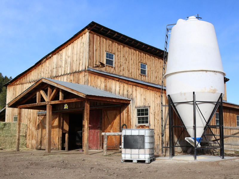 barn where brown swiss cows make milk for Gold Creek Farms cheese