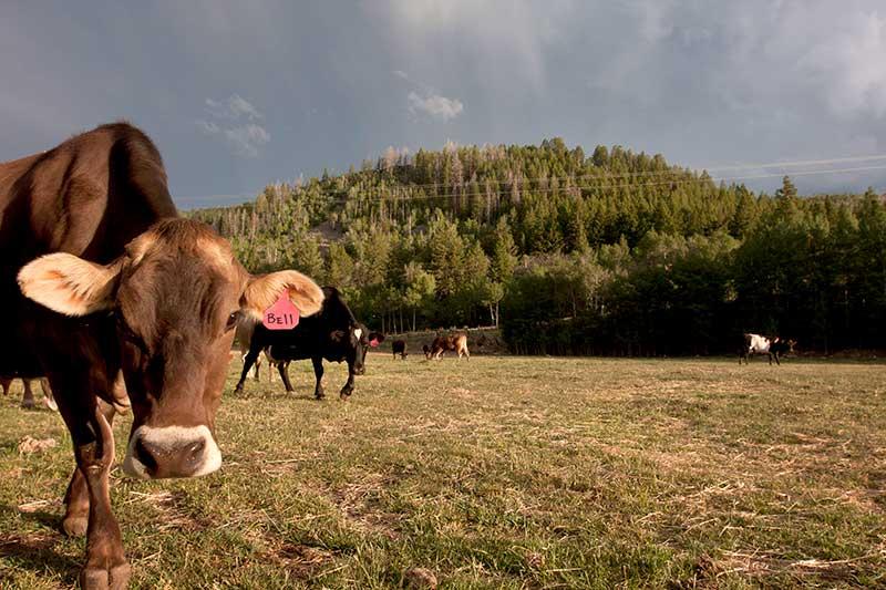 Bell at Gold Creek Farms, Utah